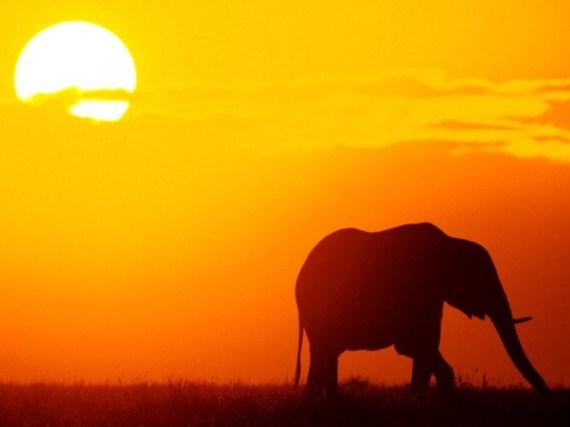 Kenyas-Wild-Beauty-At-The-Nairobi-National-Park-10